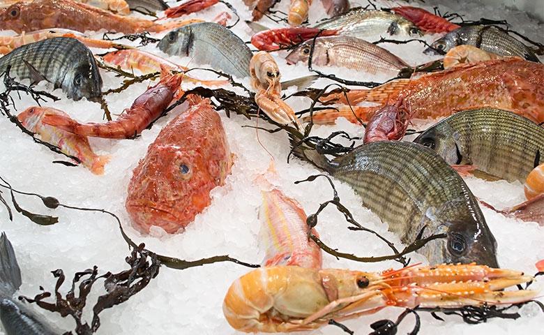 Donna Gina pesce